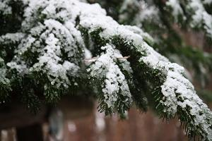 初雪2009.JPG